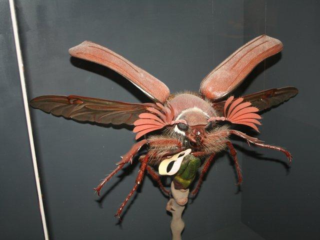 Insekt_Familie.jpg