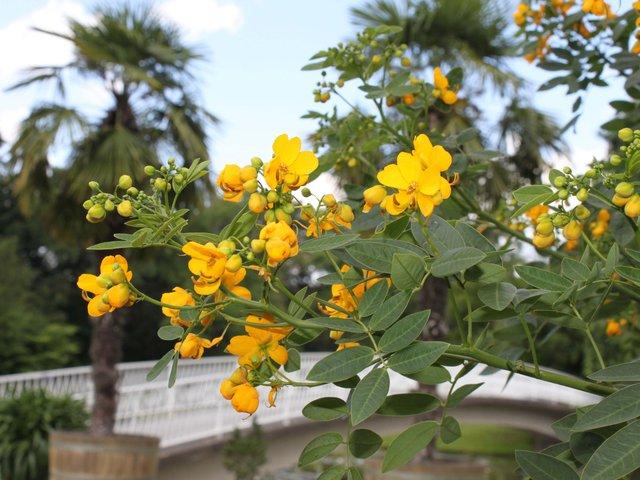 MHK_Biblische Pflanzen_Foto Karl-Heinz Freudenstein_IMG_6574.jpg