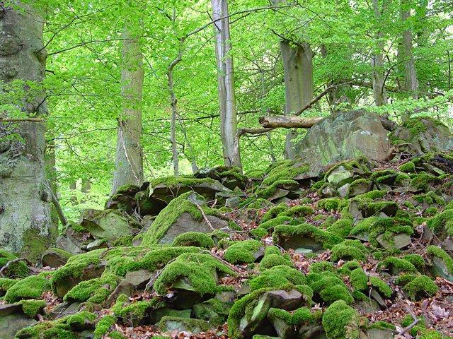Naturpark und Nationalpark Kellerwald-Edersee.jpg