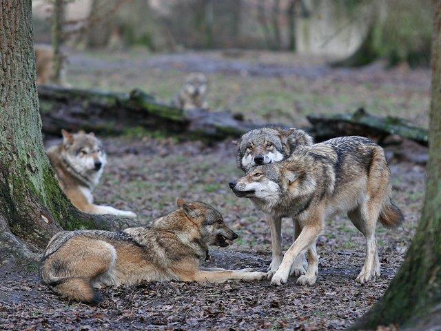 Tierpark Sababurg.jpg