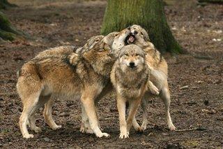 Tierparks_Anja_Gieseler.jpg